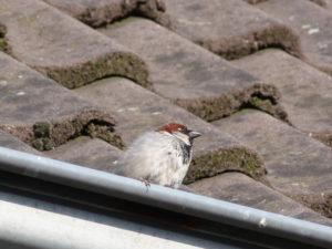 beschermde vogels flora en faunawet